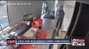 Great Dane bites burglar during home invasion [Video]