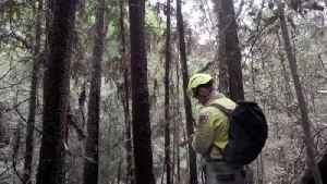 Firefighters Attempt to Save Prehistoric Trees From Australia's Wildfires [Video]