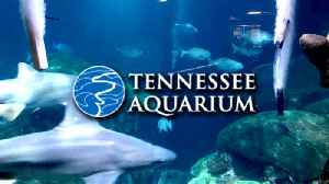Tennessee Aquarium [Video]