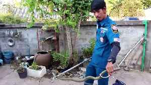 Cobra caught in Thai family's front garden after spitting venom at brave pet dog [Video]
