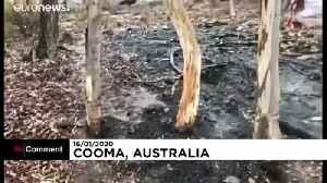 Rain relieves wildfire-ravaged Australia [Video]