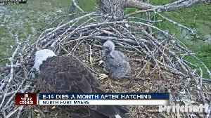 Eaglet passes away on popular eagle webcam [Video]