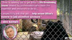 Alec Baldwin leads PETA push to free bear [Video]