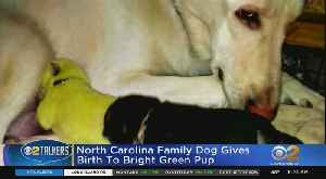 Dog Gives Birth To Green Pup [Video]