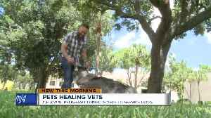 Pets healing vets: Program connects veterans to service dogs [Video]