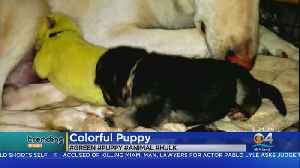 Trending: Green Puppy [Video]