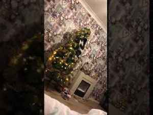 Cat Messing With Decorations on Christmas Tree Topples Over With It [Video]