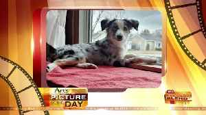 News video: Our Art's Cameras Plus Picture of the Day for January 16!