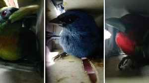 Peruvian Authorities Catch Man Trying To Smuggle 20 Birds In Suitcase