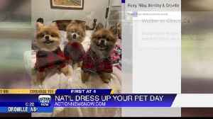 National Dress Up Your Pet Day! [Video]