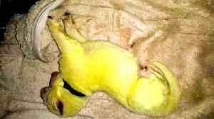 News video: North Carolina family's dog gives birth to green pup