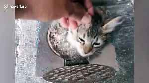 Pet kitten found with her head poking out of narrow drain hole in Malaysia [Video]
