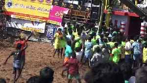 At least 25 injured in latest day of controversial bull-taming festival in south India [Video]