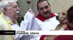 Believers and Retrievers: pets taken to church for special blessings in Madrid [Video]