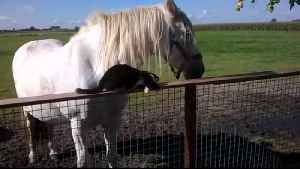 Horse And Cat Best Friends Is The Best Thing You'll See All Day [Video]