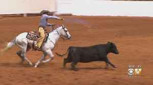 Fort Worth Stock Show & Rodeo To Open Doors Friday [Video]