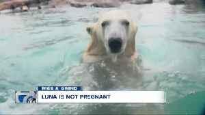 Rise & Grind: Starbucks, Luna the polar bear, Busch snow discounts [Video]