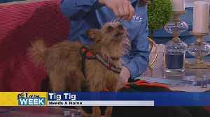 Meet Tig Tig, Our Pet Guest Of The Week [Video]