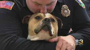 Pit Bull Graduates From K9 Training In South Jersey [Video]