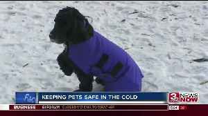 Pet owners urged to keep close eye on furry friends during arctic blast [Video]