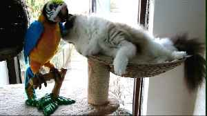 Cat meets 'parrot' for the first time and has a new best friend [Video]
