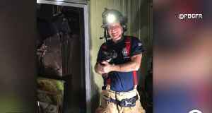 Firefighters rescue two dogs, one cat from house fire in Juno Beach [Video]