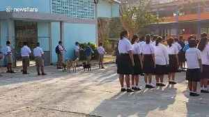 Stray dogs at school howl along to national anthem [Video]