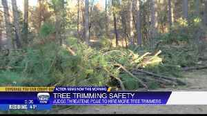 Judge threatens to force PG&E to hire more tree trimmers [Video]