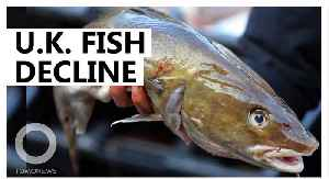 British fish species projected to decline over the next 30 years [Video]