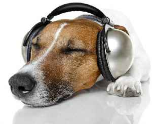 News video: Build a Music Playlist for Your Pet With Spotify