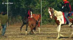 Indian Republic day preparations halted when two horses begin fighting on the field [Video]