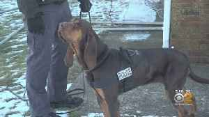 Bloodhound Hero: Police Dog Saving Lives One Sniff At A Time [Video]