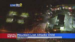 Mountain Lion That Attacked Child In Lake Forest Park Killed [Video]