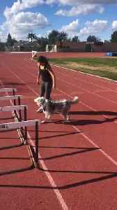 Playful Dog Comes in Way as Owner Does Track Training [Video]