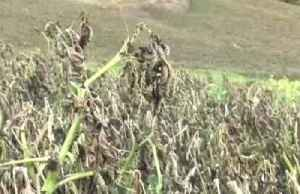 Frost linked to climate change pressures Colombian farmers [Video]