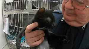 A lucky rescue for a black kitten at the SPCA Serving Erie County [Video]