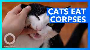 Feral cats break into body farm to eat cadavers [Video]