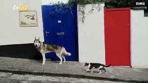 Cat and Dog Make Unlikely Fur-Ever Friends [Video]