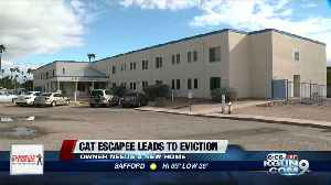 Escaped cat causes eviction [Video]