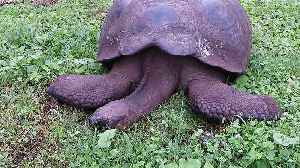 Giant tortoise appears dead but is actually sleeping in the sunshine [Video]