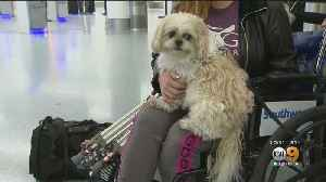 Federal Government Considers Crack Down On Emotional Support Animals [Video]