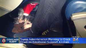 New Rules Could Bump Emotional-Support Animals From Airplanes [Video]