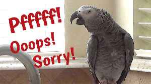 Listen to this parrot makes flatulence sounds and apologize afterwards [Video]