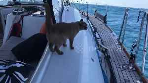 Adventurous cat spends her life sailing across the US and Caribbean with her family [Video]