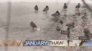 An Ode To The 'January Thaw' [Video]