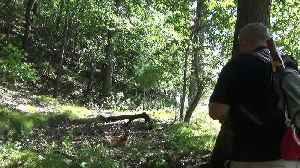 Deer Entranced by Flute Performance [Video]
