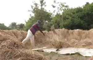 Nigerian rice farmers fall short after borders close [Video]