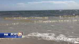 'Sand Beach Sea Oats Project' to begin in spring in Harrison County [Video]