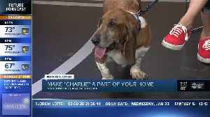 Rescues in Action Jan 25 | Charlie needs a home [Video]