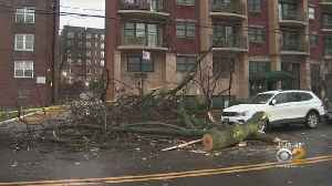 Toppled Tree Damaged Two Cars In Briarwood, Queens [Video]